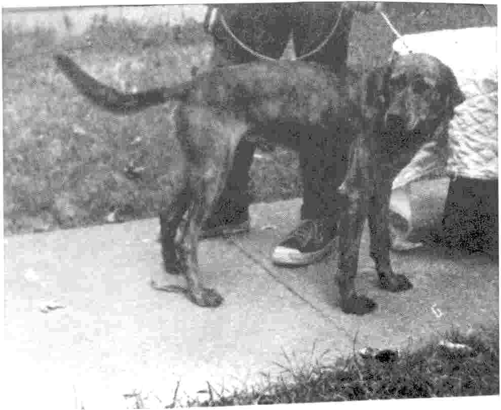 Craigslist Omaha Dogs For Sale